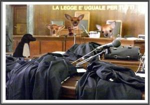 tribunale-degli-animali
