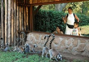 Lemuri e pubblico