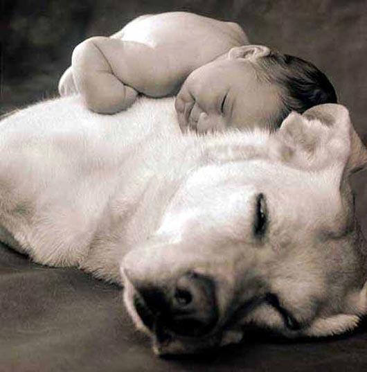 Cuccioli labrador e bambini