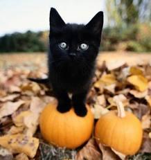 Torna la notte di Halloween e tornano i guai per i nostri amici felini. I  gatti neri, infatti, durante la notte di Halloween sono soggetti a  persecuzione ed