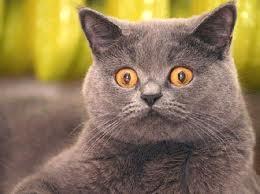 gatto stressato