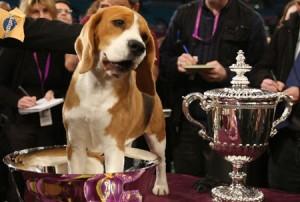 cane vincitore