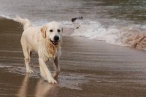 I cani rendono la spiaggia più viva!