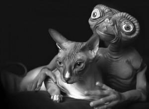 E.T. l'extraterrestre e un somigliantissimo gatto Sphynx