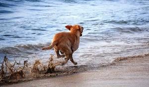 Portalo al mare con te: vi divertirete insieme!