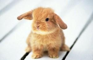 Un tenero cuccioletto di coniglio nano