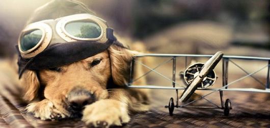 Aereo Privato Cani : Animali in aereo le regole per viaggiare con cane e gatto