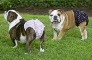 Lingerie canina per DSquared