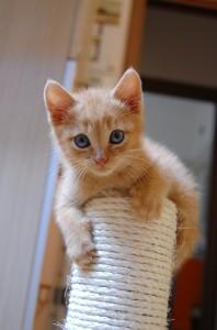 gatto tenero