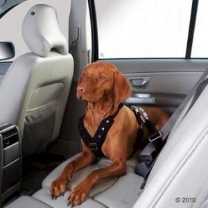 cintura di sicurezza cane