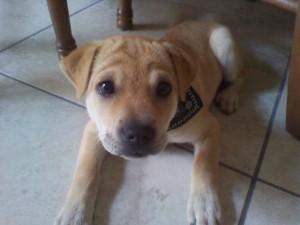 Tenere un cane in un appartamento in affitto petpassion blog for Cani da tenere in casa