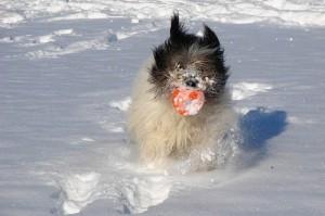Quali cani soffrono il freddo?