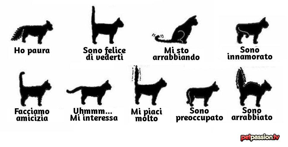 Eccezionale Cosa comunica la coda di un gatto?   Petpassion Blog IA75