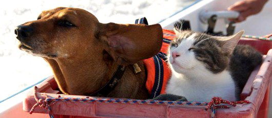 cane-gatto-traghetto-nave
