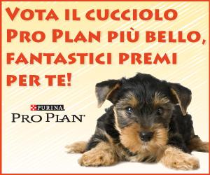 283_foto-cuccioli-razza-img_banner