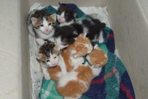 gatti-abbandonati-adozione