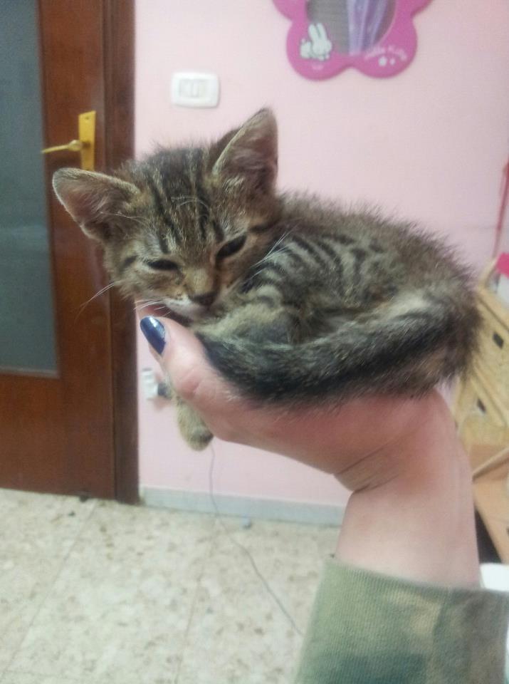 Annunci Animali Gattini In Adozione