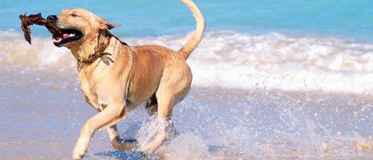 spiaggia per cani in sicilia