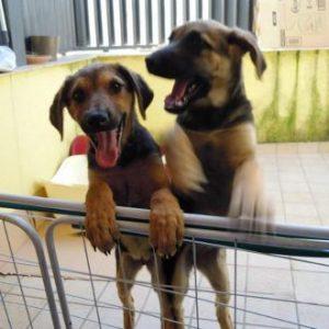 adozione-cucciole