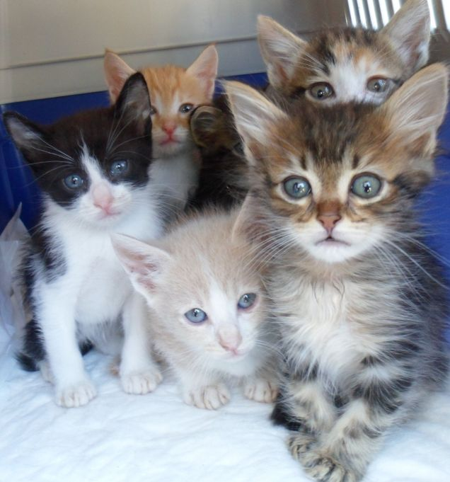 annunci animali sempre pi gattini e cangnolini in regalo