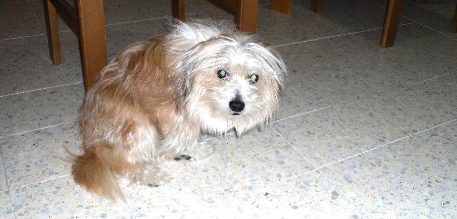 Ugo-cane-meticcio-salvato-maltrattamento