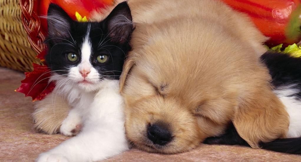 cane e gatto in vacanza