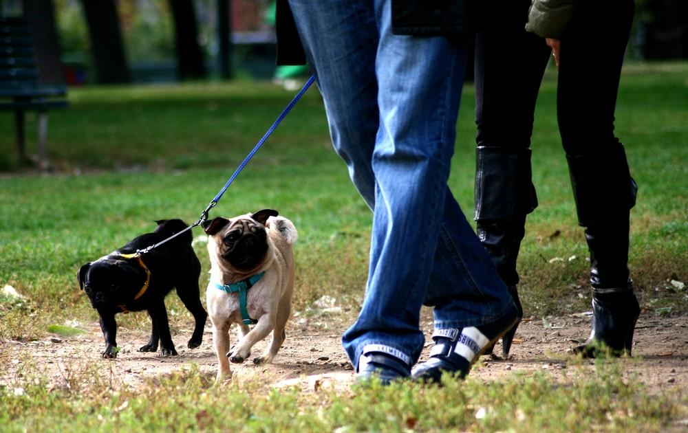 passeggiata-cane-parco