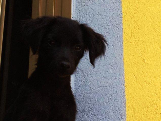 Animali domestici cercano casa: splendidi cuccioli di cane ...
