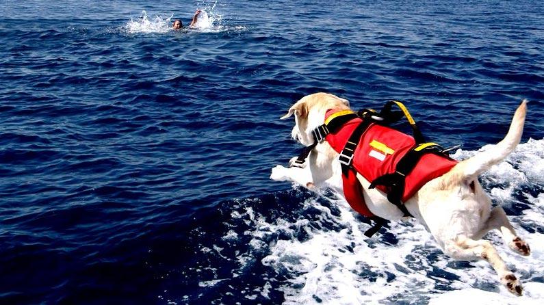 Foto SICS, cane-bagnino durante simulazione di salvataggio