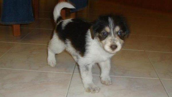 cucciola-cane-regalo