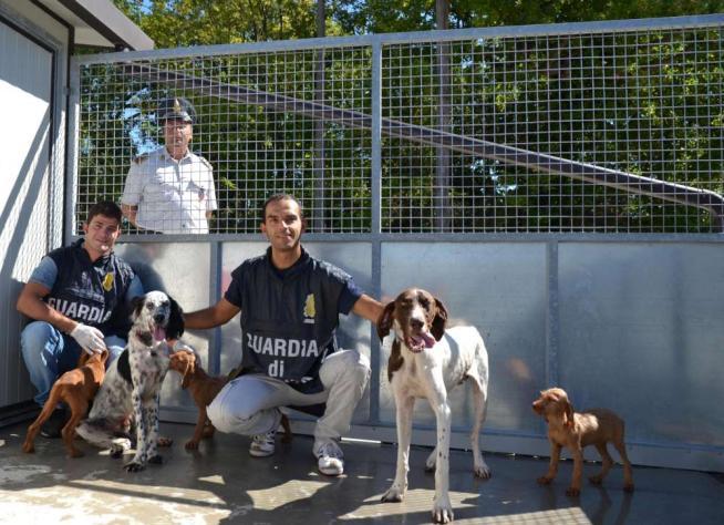 Traffico Di Cani Da Caccia 6 Cani Morti Durante Il Trasporto