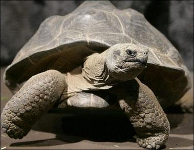 tartaruga-di-terra-abbandono