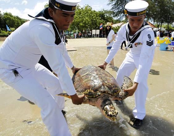 tartarughe-liberate-in-mare-ripopolamento