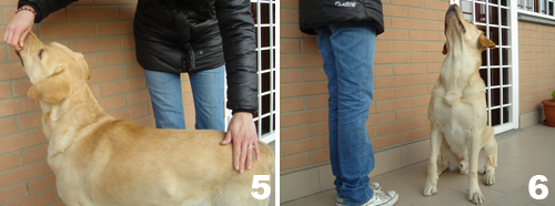3-comando-seduto-cane-razza-labrador.jpg