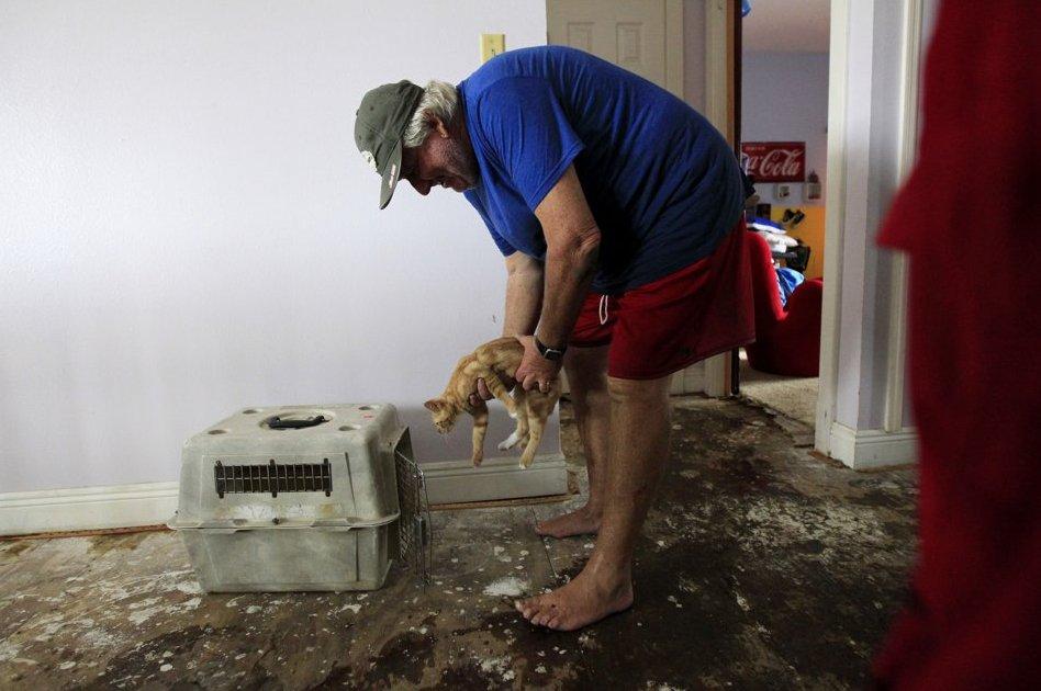 gatto-salvato-uragano-isaac