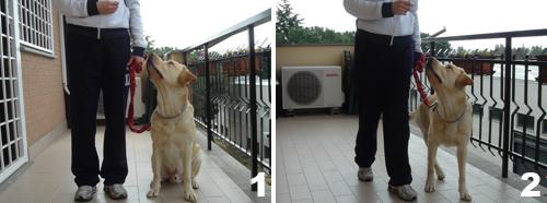 addestramento-insegnare-al-cane-comando-piede_1