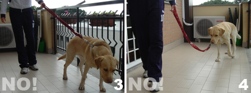 addestramento-insegnare-al-cane-comando-piede_2