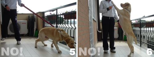 addestramento-insegnare-al-cane-comando-piede_3
