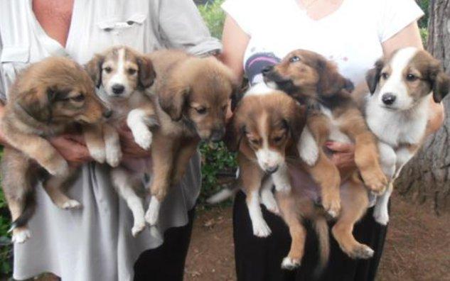 cuccioli-cane-in-regalo