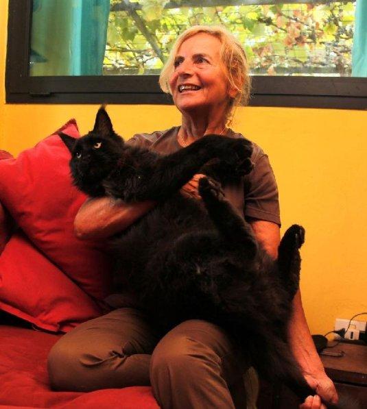La pantera avvistata a sciano un gatto gigante di razza - Gatto solo in casa per 15 giorni ...