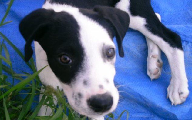 meticcio-cane-in-adozione-palermo