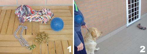 addestramento-cane-comando-porta_1