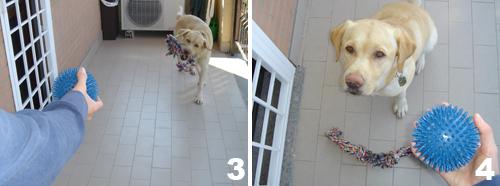 addestramento-cane-comando-porta_2