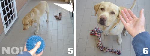 addestramento-cane-comando-porta_3