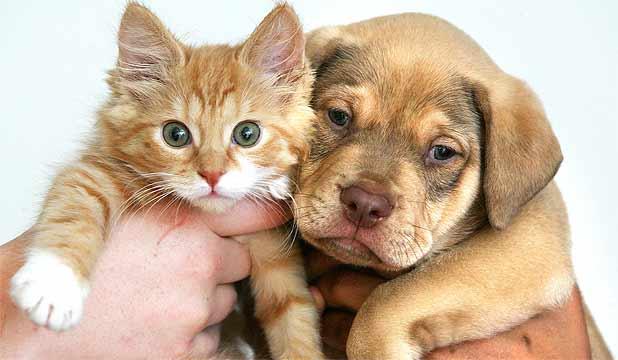 Favoloso Regalare un cucciolo di cane o di gatto per San Valentino  OD89