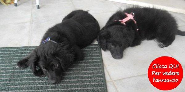 Cuccioli cane in regalo annunci di adozione in regalo for Regalo annunci
