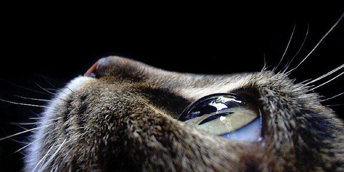 occhi-gatto-nero-caccia