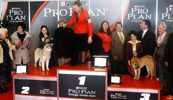 podio-cuccioli-cani-razza-proplan