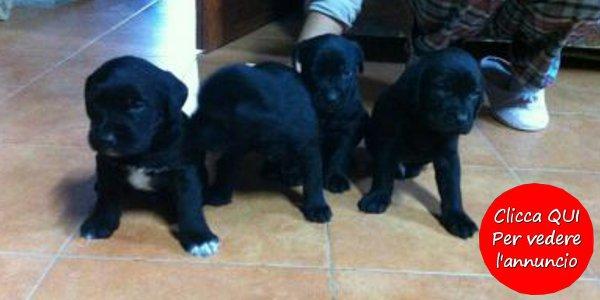 Annunci animali tanti cuccioli in cerca di casa petpassion for Sito annunci regalo