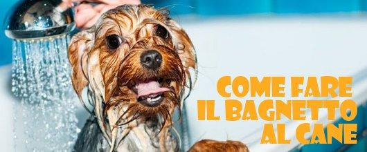 Sondaggio friskies risultati della ricerca sul lavaggio - Come fare il bagno al gatto ...